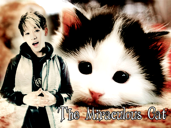 The Miraculous Cat